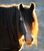 Gypsy Horse Prints - The Blagdons Abbey Print by Terry Kirkland Cook
