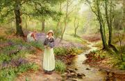 Woodland Scenes Painting Posters - The Bluebell Glade Poster by Ernest Walbourn