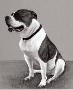 Custom Pet Drawing Prints - The Boss - Portrait of an American Bulldog Print by Ruthie K Sutter