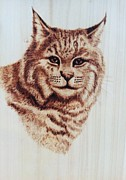 Bobcat Pyrography Prints - The Boss Print by Susan Rice