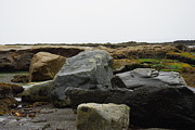 Marilyn Wilson - The Boulders at Botanical Beach