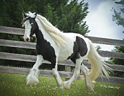 Gypsy Cob Framed Prints - The Bouquet Framed Print by Terry Kirkland Cook