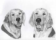 Retrievers Drawings - The Boys by Marlene Piccolin