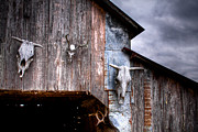 Barn Storm Prints - The broad side of a... Print by Pixel Perfect by Michael Moore
