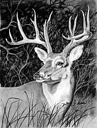 Deer Drawings Posters - The Buck Poster by Howard Dubois