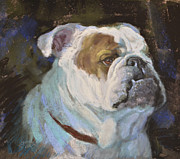 English Bulldog Paintings - The Bulldog by Mary Ann Cherry