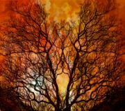 Exodus Framed Prints - The Burning Bush Framed Print by Lynn Andrews