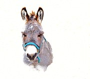 Donkey Digital Art Metal Prints - The Burro Metal Print by Robin Hewitt