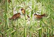 Starlings Paintings - The Bush Chatters by Phong Trinh