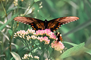 Indiana Flowers Prints - The Butterfly and The Bumblebee Print by DigiArt Diaries by Vicky Browning