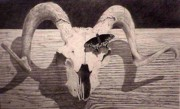 Wildlife Landscape Drawings - The butterfly and the skull by David Ackerson