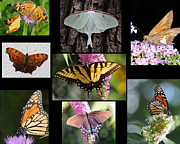 Brown And Green Prints - The Butterfly Collection Print by Paul Ward