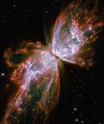 Nebula Posters - The Butterfly Nebula Poster by Stocktrek Images