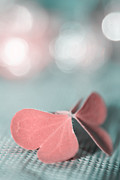 Aimelle Photography Photo Prints - The Butterfly p02b Print by Aimelle