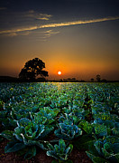 Environement Posters - The Cabbage Patch Poster by Phil Koch