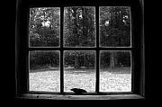 Cabin Window Prints - The call of freedom Print by David Lee Thompson