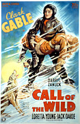 Clark Gable Framed Prints - The Call Of The Wild, Clark Gable Framed Print by Everett