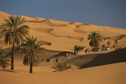 Camel Photos - The Caravan Travels Amongst The Dunes by Carsten Peter