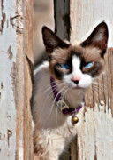 Pet Photo Prints - The Cat A Purrfect Carnivore Print by Christine Till