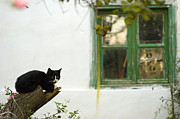 Manolis Tsantakis Posters - The cat and the old window Poster by Manolis Tsantakis
