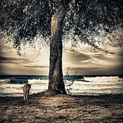Black Cat Landscape Prints - The Cat And The Sea Print by Stylianos Kleanthous