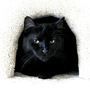 Animal Shelter Posters - The Cat Cave Poster by Glennis Siverson