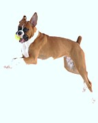 Dogs Swimming Photos Prints - The Champ Boxer Print by Lisa  DiFruscio