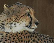 Cheetah Acrylic Prints - The Cheetah 2 Acrylic Print by Ernie Echols