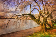 Cherry Blossom Trees Prints - The Cherry Blossom Festival Print by Lois Bryan