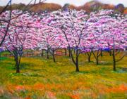 Cherry Trees Framed Prints - The Cherry Orchard Framed Print by Michael Durst