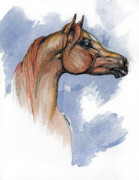 Horses Drawings - The Chestnut Arabian Horse 4 by Angel  Tarantella