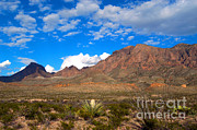 Desert Prints - The Chisos Mountains, Big Bend, Texas Print by Gregory G. Dimijian, M.D.