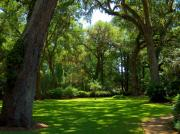 St. Simons Island Art - The Churchyard by M J Glisson