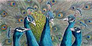 Peacock Metal Prints - The City Council Metal Print by Susan Moyer