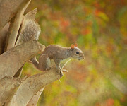 Fox Squirrel Art - The Climber by Kim Hojnacki