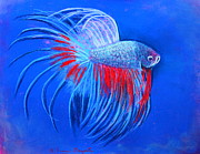 Betta Pastels Prints - The Closeup Print by M Diane Bonaparte