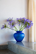 Potted Plants Posters - The Color Blue Poster by Eggers   Photography
