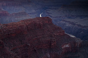 Grand Canyon National Park Prints - The Colorado River at Hopi Point Print by Andrew Soundarajan