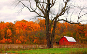 Indiana Autumn Prints - The Colors of Fall Print by Robin Pross