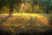 Colors Of Autumn Originals - The Colors of Light by William Fields