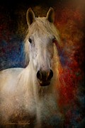 Equestrian Metal Prints - The Colours Of Love. Metal Print by Dorota Kudyba