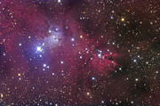 Star Clusters Posters - The Cone Nebula Poster by Roth Ritter