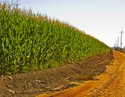 Agriculture Digital Art Originals - The Corn Field and Country Road by Mark Hendrickson