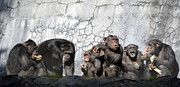 Chimpanzee Art - The Cousins Visit by Fraida Gutovich