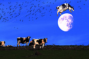 Humour Digital Art Prints - The Cow Jumped Over The Moon Print by Wingsdomain Art and Photography