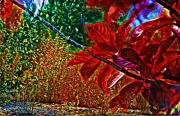 Plant Life Digital Art Prints - The Crimson Branch Print by Garry Staranchuk