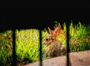 Rabbit Digital Art Metal Prints - The Culprit Metal Print by Lois Bryan