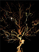 Winter Night Pyrography Metal Prints - The Curious Tree Metal Print by Yvonne Scott