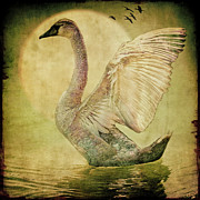 Chris Lord - The Cygnet