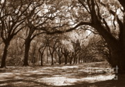 Live Oaks Framed Prints - The Dance - Sepia Framed Print by Carol Groenen